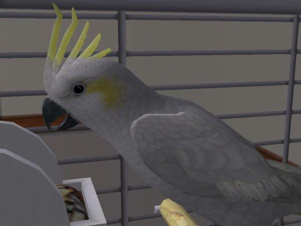 Маша - попугай Дениса