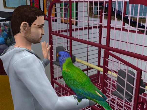 Денис и попугай.