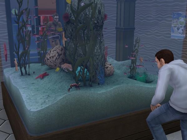 Денис наблюдает за рыбами.